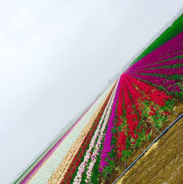 A colorful field of flowers. (Photo by Scott Bridges)